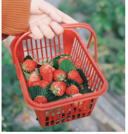 Importance Of Food Drain Basket And Features
